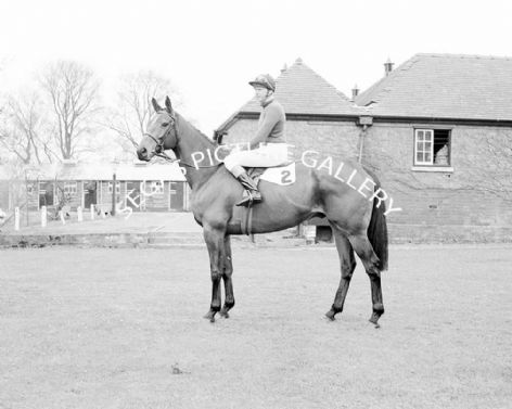 Racehorse Woodland Venture with Jockey Terry Biddlecombe